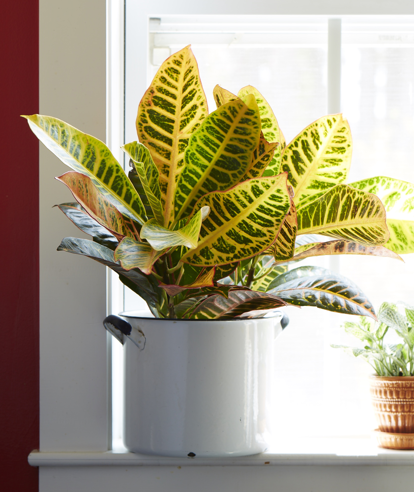 Good Large House Plants Celebrate National Indoor Plant Week With Costa Farms