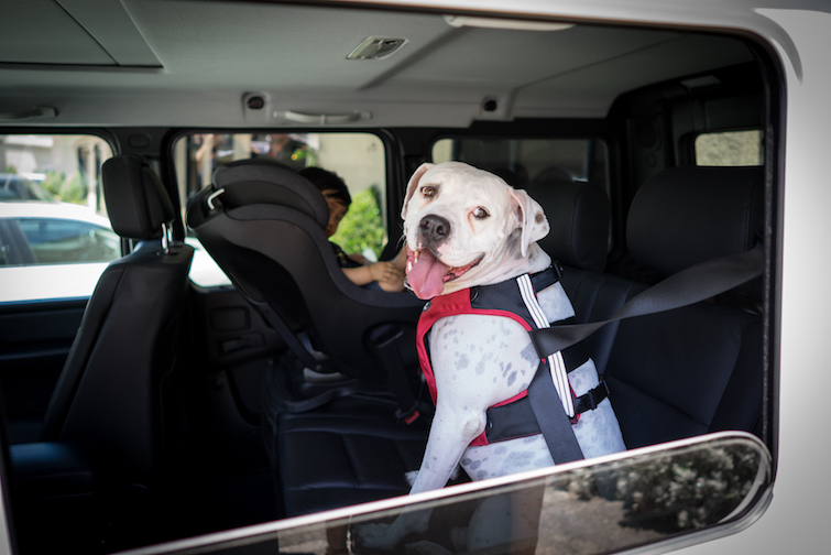 Car Safety Belt Sleepypod's Clickit Terrain Dog Safety Harness Earns Five