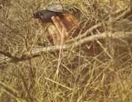 Camouflaged German observer