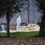Avian Flu Outbreak Takes Poultry Producers Into Uncharted Territory