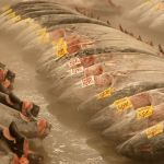 Why Freezing Didn't Keep Sushi Tuna Safe From Salmonella