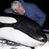 cousteau whale