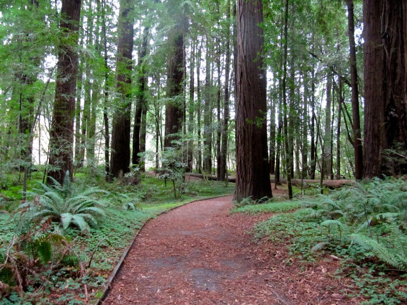 Hendy Woods in Mendocino, one of the state parks that was set to close. (Molly Samuels/KQED)