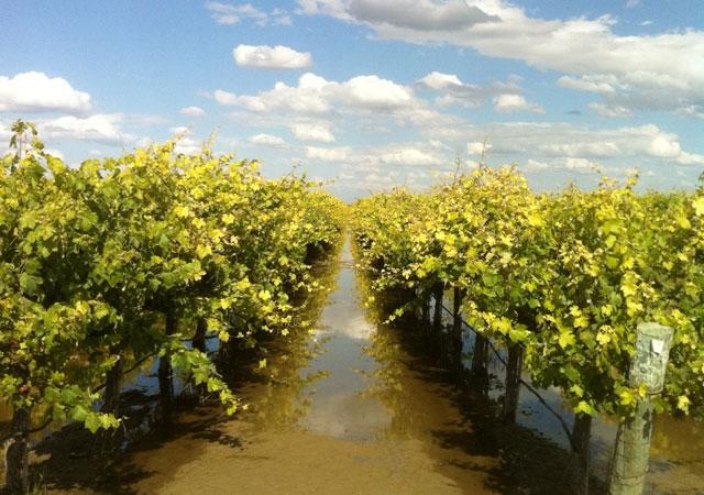 vineyard0405