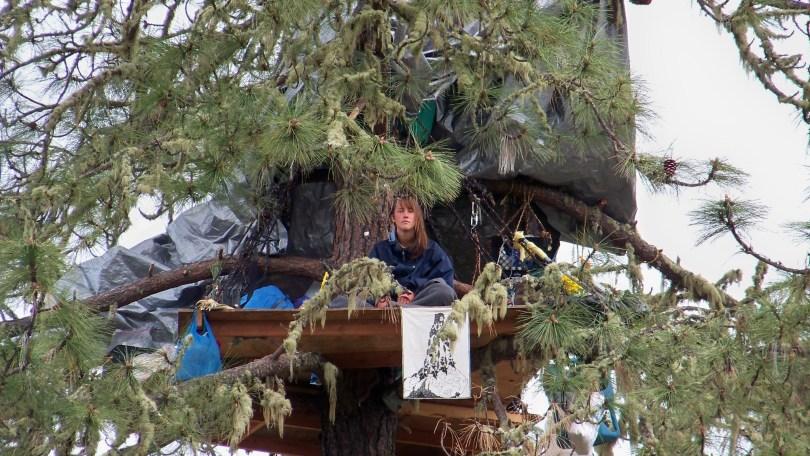 Warbler lived in a tree for nine week (John Wagenet)