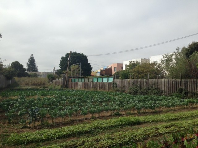 Little City Gardens, an urban farm in the Mission Terrace neighborhood of San Francisco. (Isabel Angell / KQED)