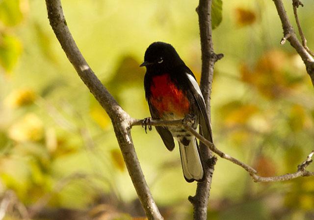 PhotoWeek131122bird