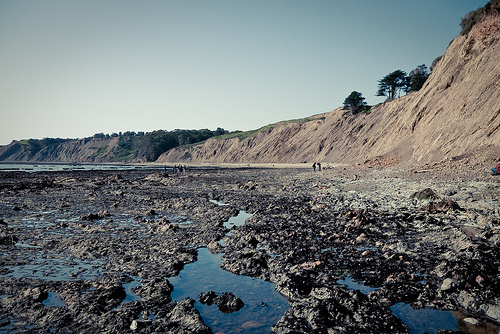 A listener recommended Bolinas' Duxbury Reef as a good place to take kids tidepooling. Photo: Stefan Klocek/Flickr