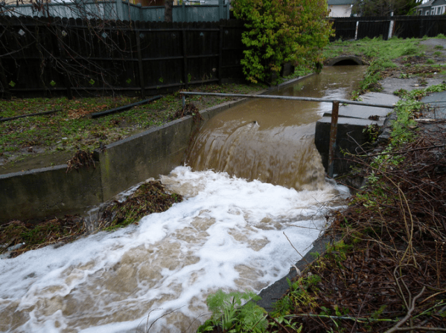 Codornices Creek  on Feb. 8, 2014, (Jef Poskanzer/Berkeleyside)