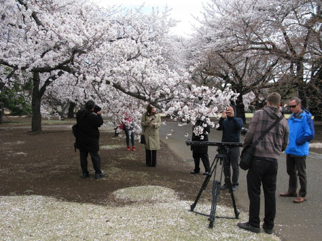 "The ""Family Ingredients"" crew shot in Japan during cherry blossom season. (Photo by Dan Nakasone)"