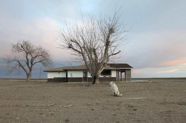 A dog hangs around an abandoned farmhouse on February 6, 2014 near Bakersfield, California. (David McNew/Getty Images)