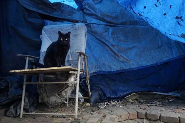 One of Doug Wynne's six cats sits near his tent at the Jungle. (James Tensuan/KQED)