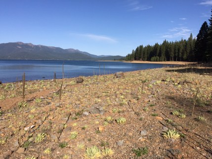 Lake Almanor, on the Feather River in Plumas County, is the state's eighth-largest reservoir. May 2015.