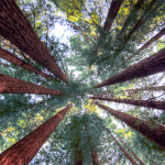 This Black Friday to Be Less Gross, Thanks to Free Redwood Parks