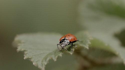 Medium Of What Do Lady Bugs Eat