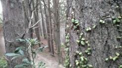 Hobbit woods
