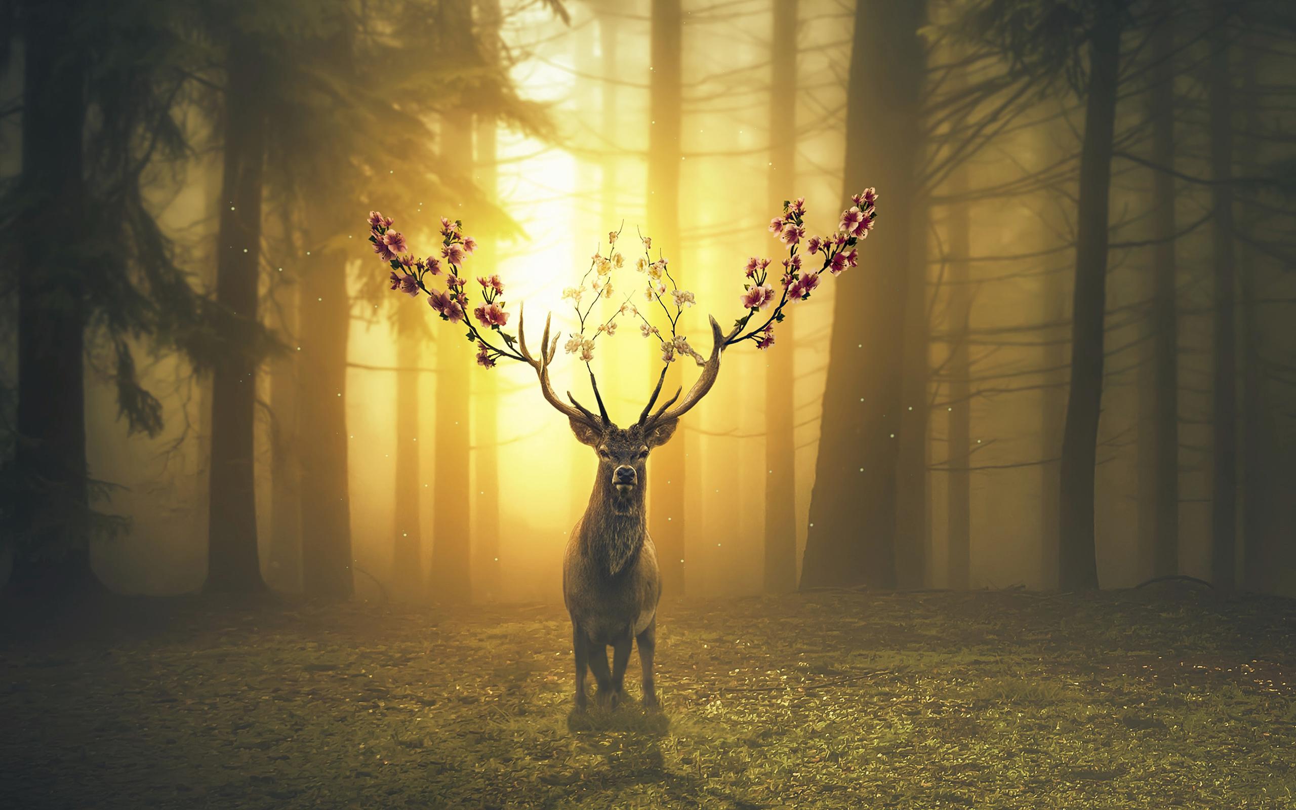 Fantasy Forest 3d Desktop Wallpaper Spring Deer Forest Wallpapers Wallpapers Hd