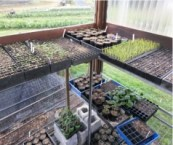 Happy seedlings in their warm home