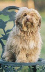 Raza Peque O Perro Le N Fotos De Perros Peque O Perro Le N