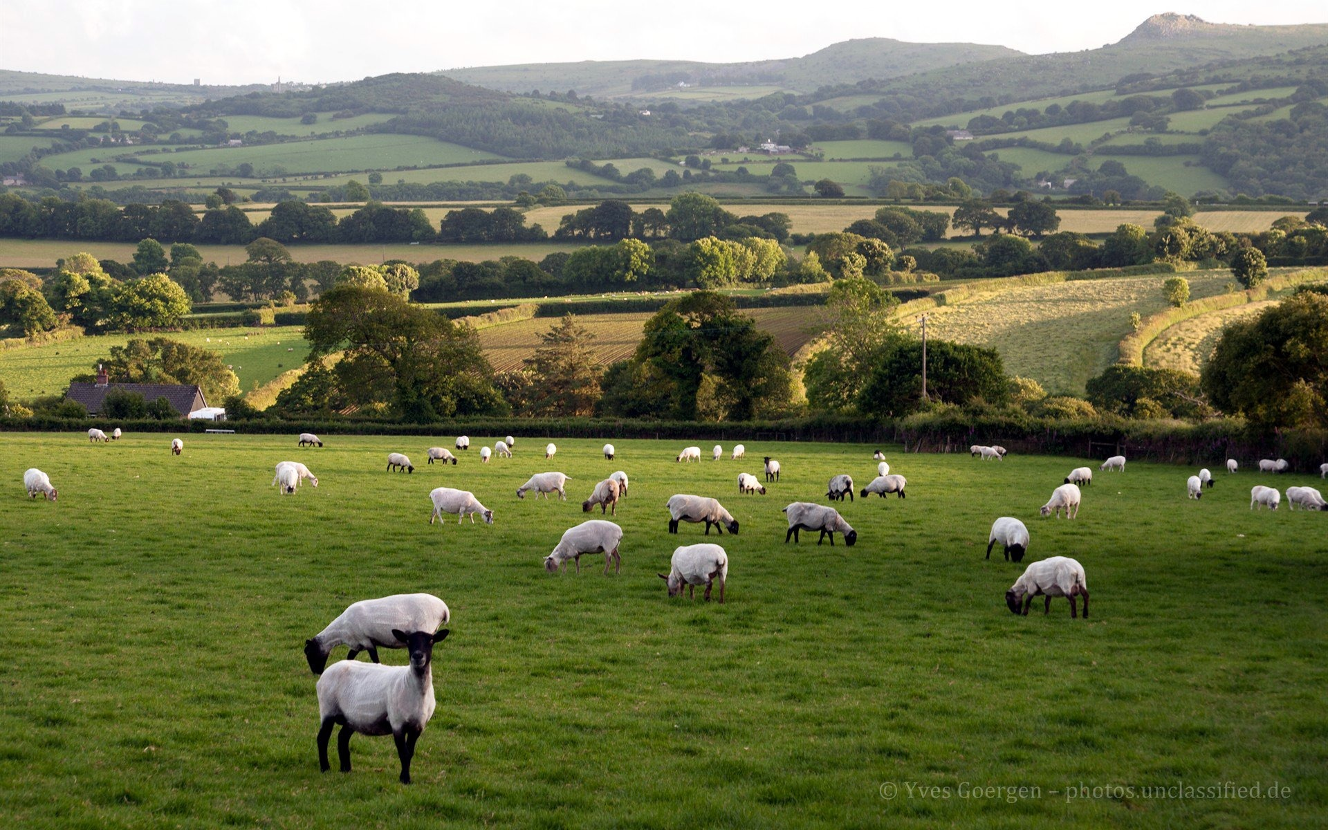 Ireland Fall Wallpaper Sheep Wallpaper 1920x1200 Download 10wallpaper Com