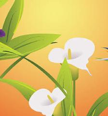 064_nature_lily-flower-leaf-free-vector