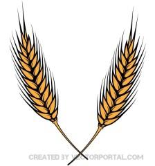 069-wheat-vector-illustrator