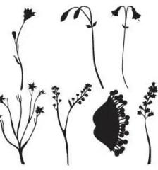 012_ornament_floral-ornaments-free-vector