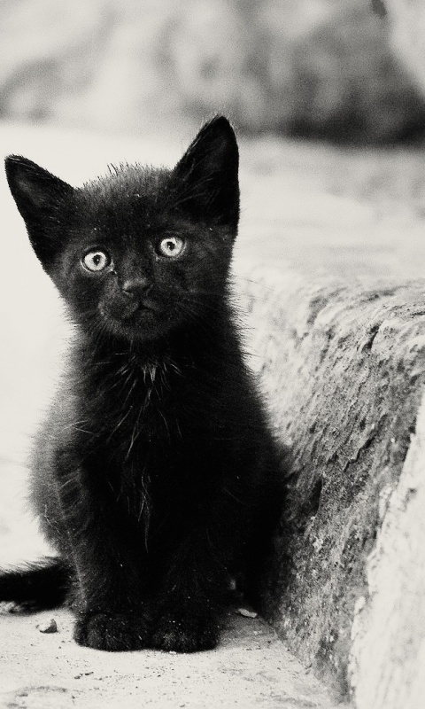 Beautiful Sad Quotes Wallpaper Lonely Black Kitten