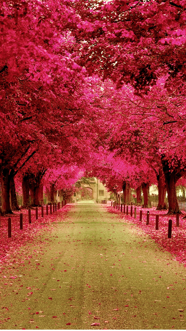 Pink Flower Wallpapers With Quotes Pink Flower Street
