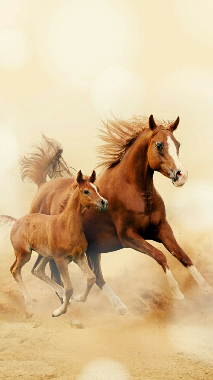 Quote Wallpaper For Sony Xperia Running Horse Wallpaper