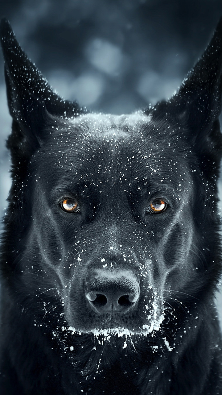 Quote Wallpaper For Sony Xperia Black Horror Dog