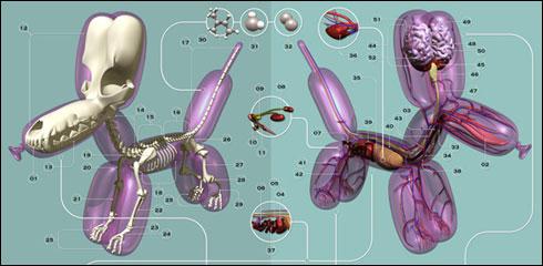 anatomia-perros-globo.jpg