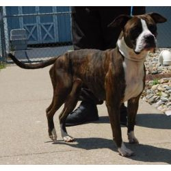 Fun Dog Removed After Neglect Arrest Animal Mclean Man Facing Cruelty Charges Daviess County Animal Shelter Facebook Daviess County Animal Shelter Phone Number bark post Daviess County Animal Shelter