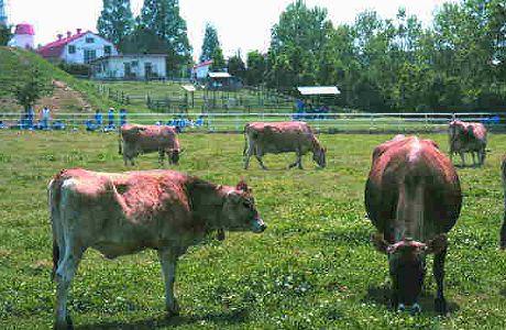 共進ファミリー牧場 - 動物とふれあえる