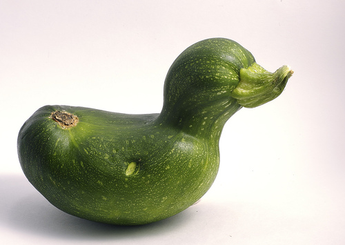 Zucchini Duck, courtesy of http://www.flickr.com/photos/alexgee/271321325/