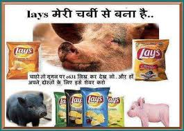 LAYS chips consists of E631 (PIG FAT)
