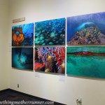A Visit to Birch Aquarium and La Jolla