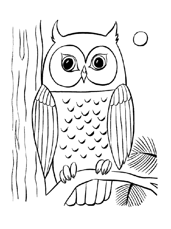 Cute Printable Owl Coloring Pages for Kids 360ColoringPages