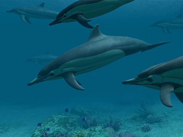 Iphone 7 Animated Wallpaper Fish 3d Screensavers Dolphins Deep Sea Dolphins 3d