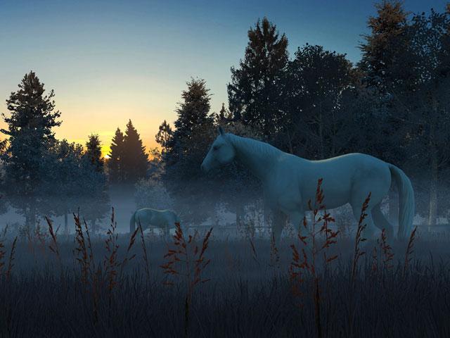 Windows Xp 3d Wallpaper Free Download Nature 3d Screensavers Fog Horses Live Wallpaper A