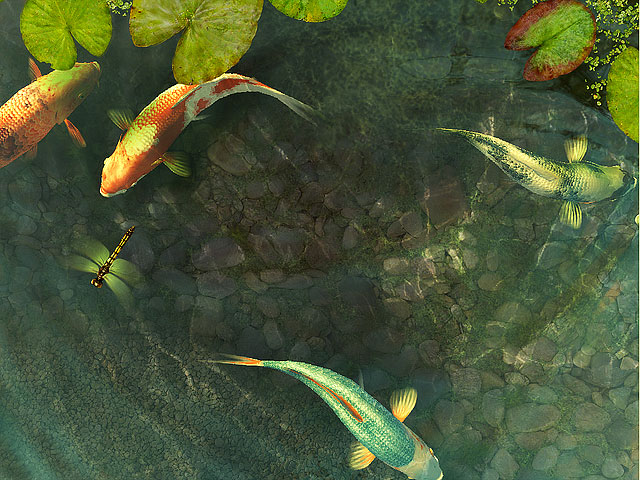 Animated Aquarium Wallpaper For Windows 7 Free Fish 3d Screensavers Koi Fish An Amazing Japanese