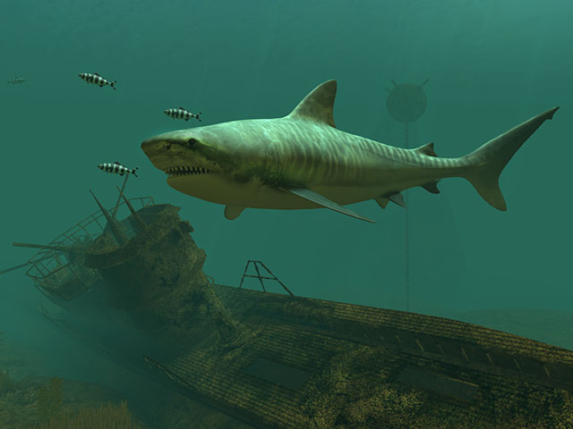 Sharks 3d Live Wallpaper And Screensaver Fish 3d Screensavers Tiger Sharks