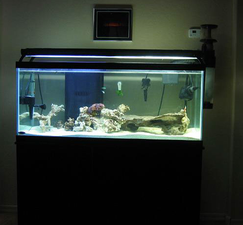 gallon fish tank 75   75 gallon Tanganyikan cichlid aquarium fish tank