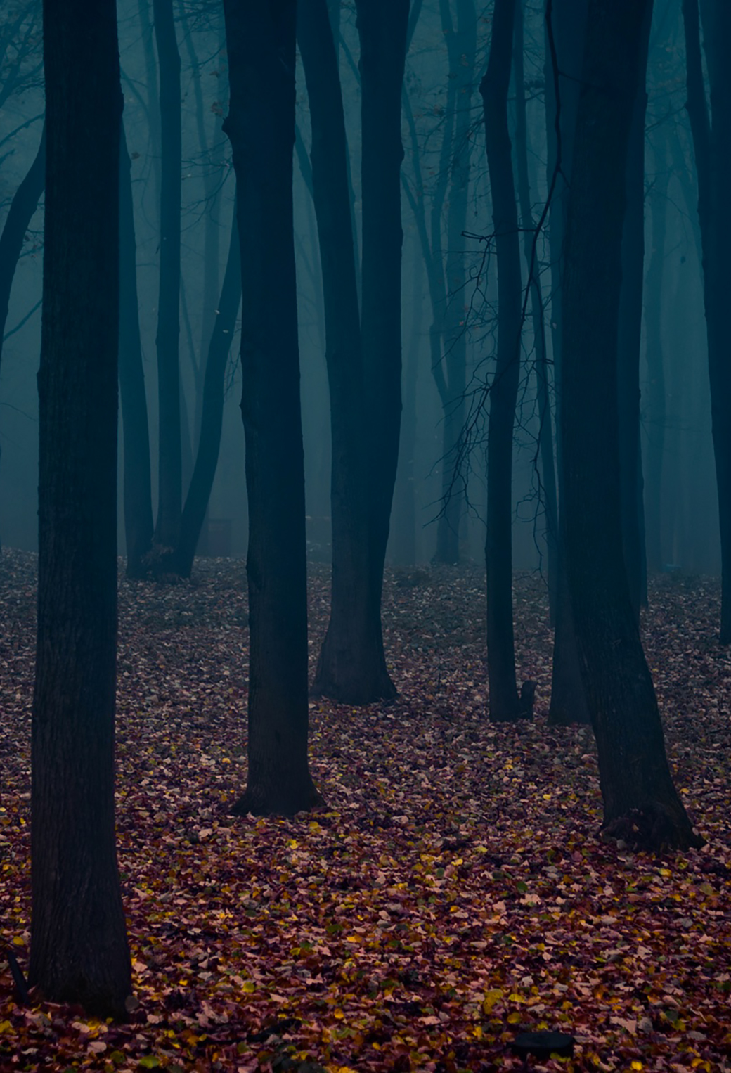 Pretty Girl Cartoon Wallpaper Gloomy Forest Wallpaper For Iphone X 8 7 6 Free