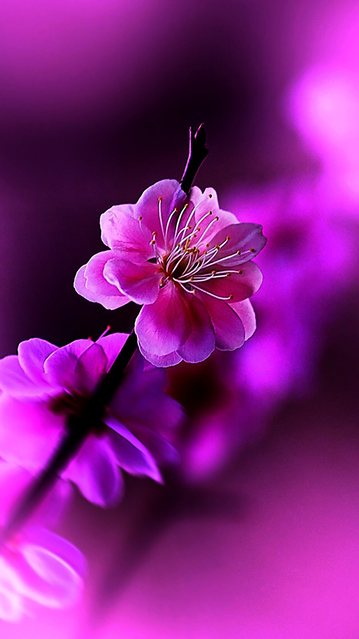3d Parallax Background Wallpaper Free Download Flowers Violet Wallpaper For Iphone X 8 7 6 Free