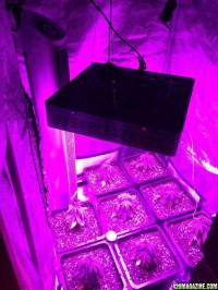 First Grow - 3x3' Tent - Soil - Mars 1200W LED