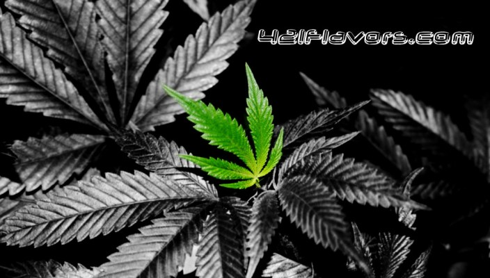 Weed / Marijuana Leaf Wallpaper Background