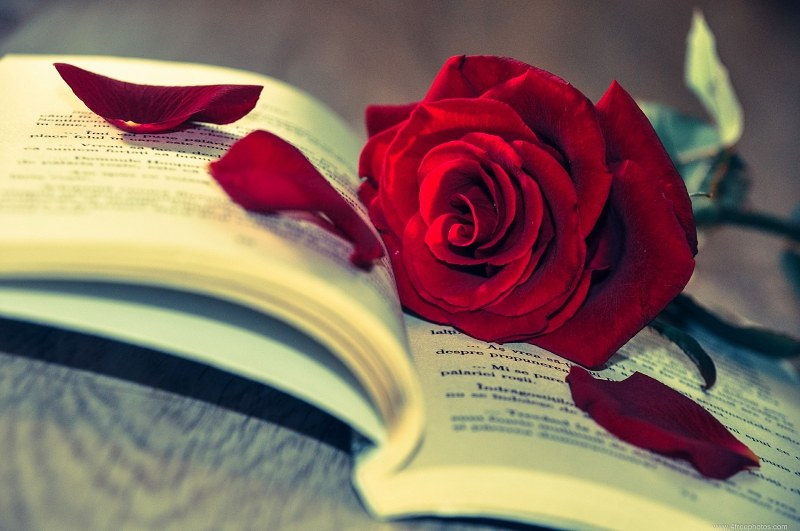 3d Pink Flower Wallpaper Rose And Book Free Image On 4 Free Photos