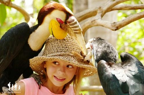 Bali-Bird-Park (117) copie