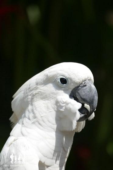 Bali-Bird-Park (85) copie